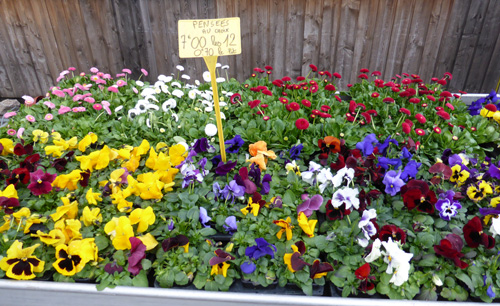 haraut nancy vnete de fleurs