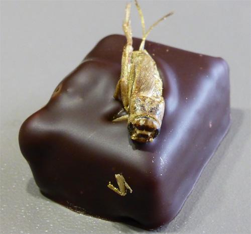 musquar chocolat insecte grillon nancybuzz