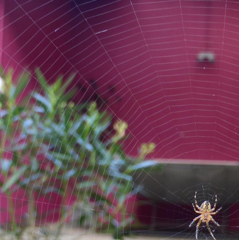 araignée au centre de sa toile nancybuzz