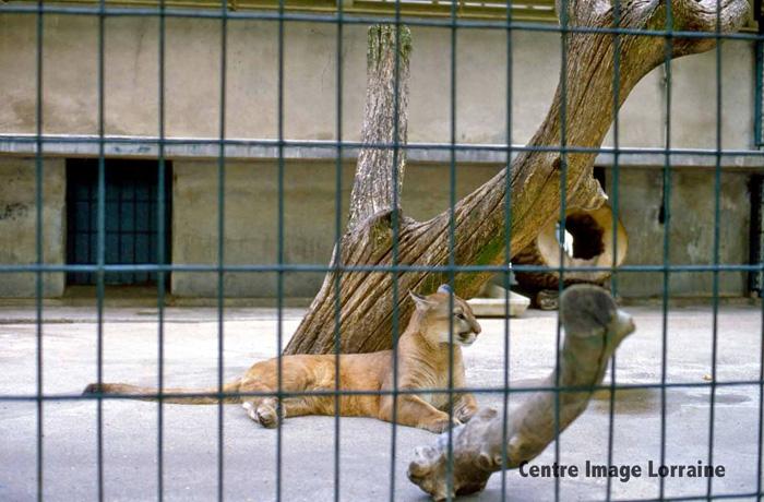 zoo du parc de la pepiniere nancy