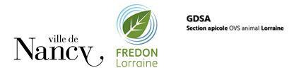 frelons asiatiques en lorraine nancy fredon