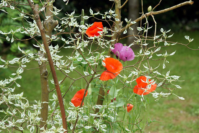 adoue-jardin-fleur-chevry