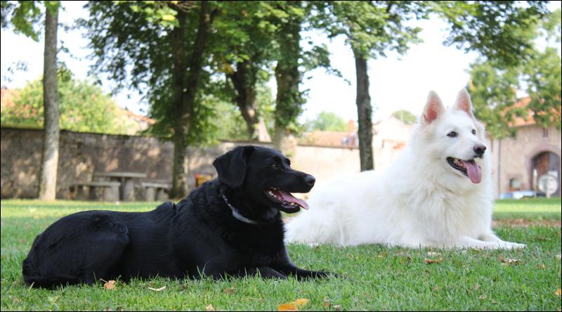chiens-cindy