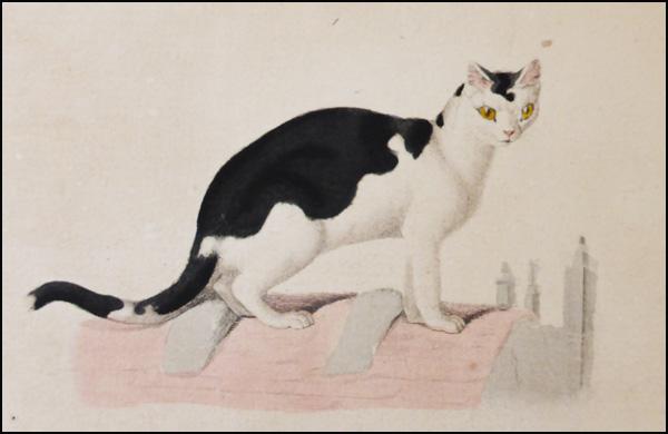 le-litographe-chat