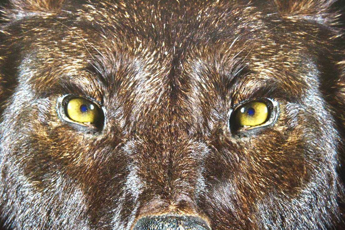 villers les nancy patrick leclerc photographe animaux naturalisés empaillés taxidermie exposition Animals fevrier 2018