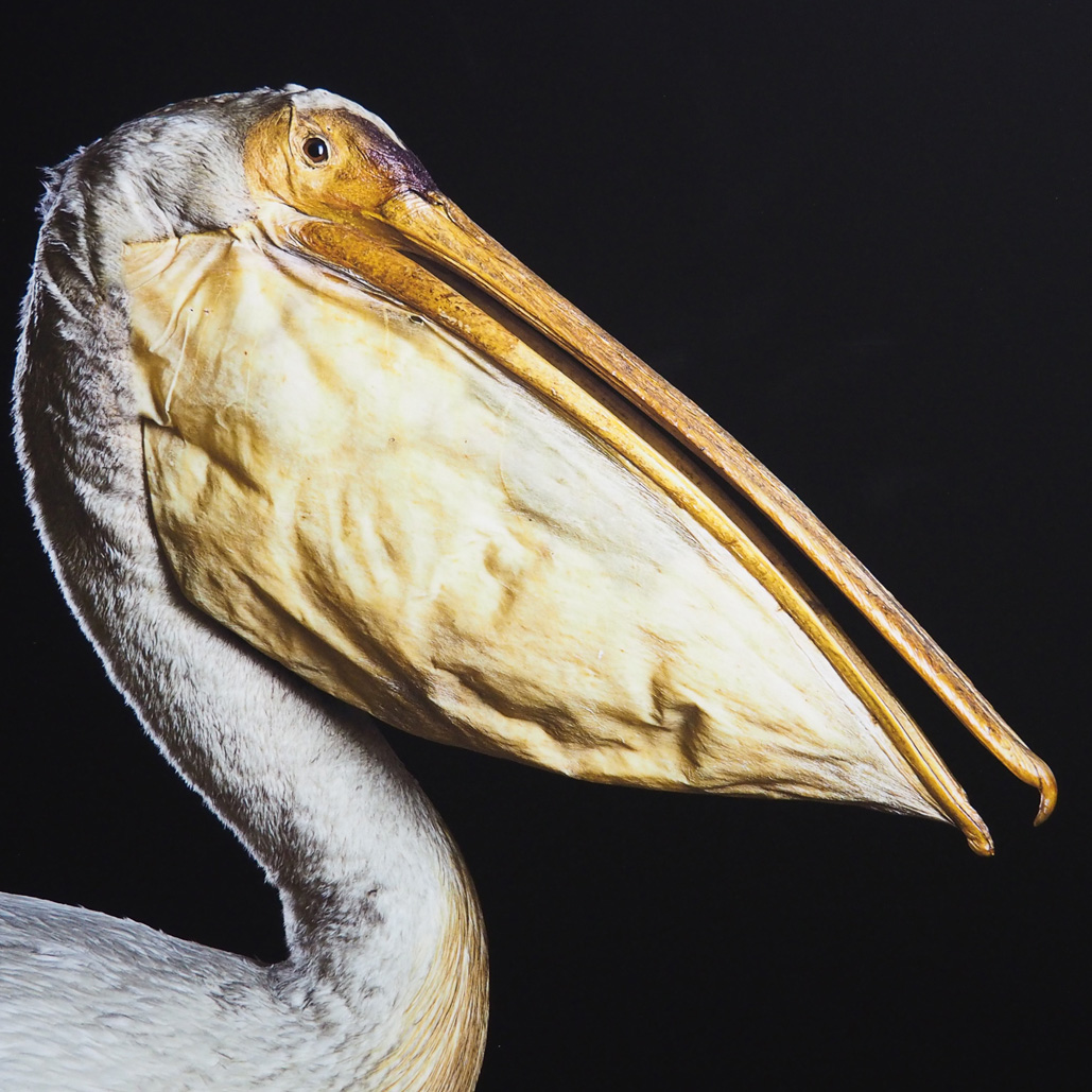 patrick-leclerc-animals-pel