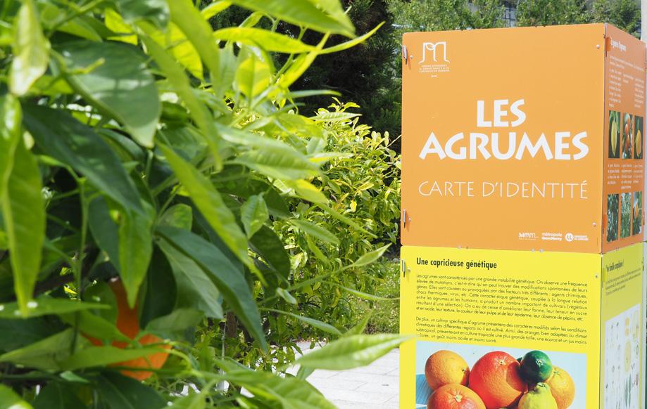 exposition sur les agrumes jardin botanique jean-marie pelt villers les nancy
