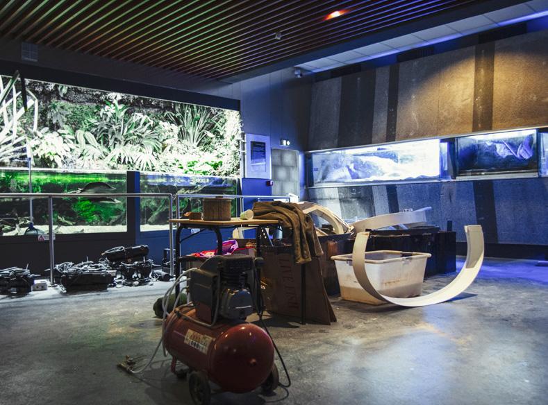 nancy reouverture musee aquarium travaux