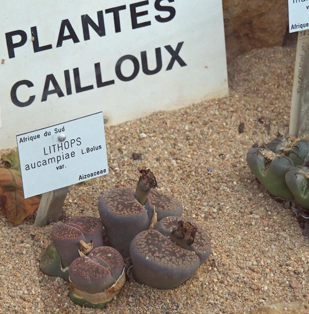 nancy villers jatdin jean marie pelt expo super heros super plantes